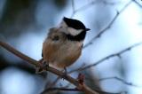 Discover Reifel BirdSanctuary