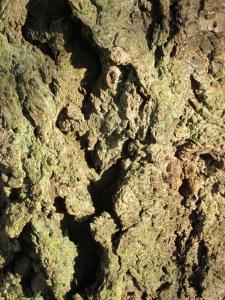 Douglas-fir Bark