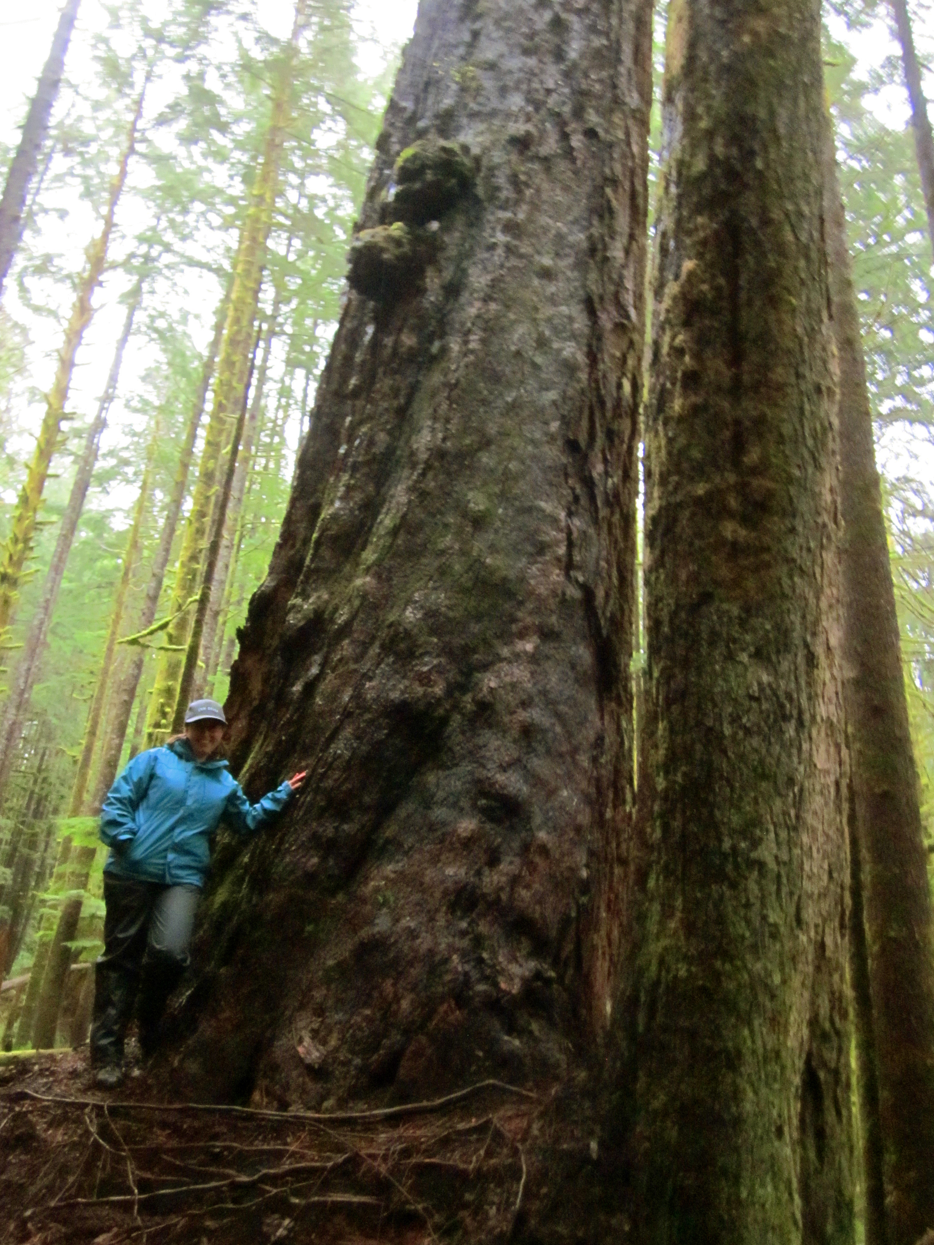 When Was Vancouver Island Discovered