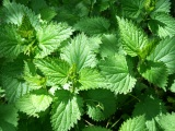 Five Very GreenThings